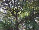 【ニコニコ動画】【NNI】 仮面の森 【オリジナル曲】を解析してみた