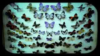 The Velvet Underground - Sunday Morning (日本語和訳ver)