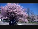 【ニコニコ動画】【お気楽バイク旅】高遠と諏訪の桜 2015-04-16【MT-07】を解析してみた