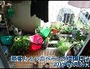 【ニコニコ動画】静葉ちゃんのベランダ菜園日誌 2015年4月24日を解析してみた