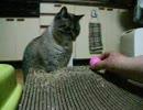 【ニコニコ動画】ジャンくんのおもちゃフェルトキャットキャンディを解析してみた