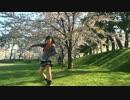 【とみちゃす】金曜日のおはよう@踊ってみだ【弘前城の桜】