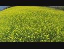 【ニコニコ動画】NC750X 菜の花ツーリング in 四国中央市を解析してみた