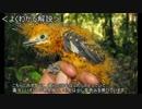 【ニコニコ動画】ゆっくり動物雑学「毛虫に擬態する…」を解析してみた