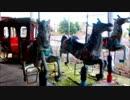 【ニコニコ動画】carousel(Teiji Furuhashi - drawing_3)を解析してみた