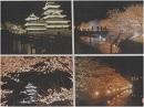 【桜前線便り】白黒桜のコントラスト、松本城の夜桜[桜H27/5/5]