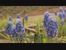 【ニコニコ動画】ちょろちょろと、春を探してみたを解析してみた