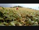 【ニコニコ動画】日本二百名山に登ってみた52-2/2 笹ケ峰(+伊予富士)編を解析してみた