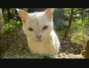 【ニコニコ動画】とある田舎の猫事情 ~ナオコ猫、塀越しにまたたびを堪能~を解析してみた