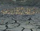 【ニコニコ動画】池という名の地球の最後を解析してみた