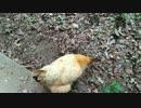 【ニコニコ動画】ハトがいたを解析してみた