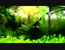 【ニコニコ動画】水草水槽20cmキューブでのんびりしていってねを解析してみた