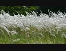【ニコニコ動画】尋常でない白いもふもふが風に揺れるだけを解析してみた