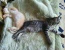 保護猫お昼寝