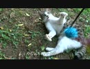 【ニコニコ動画】公園の少女猫のやる気スイッチを連打してみたを解析してみた