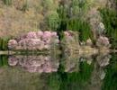【ニコニコ動画】【NNIオリジナル】湖面桜【BGM】を解析してみた