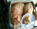 猫の寝相にびっくりする2 thumbnail