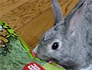 新しいエサに興奮を抑えきれないウサギ