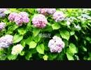 【ニコニコ動画】紫陽花 feat.グル美を解析してみた