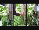 【ニコニコ動画】スーパーツリーランド2 6本の木を解析してみた