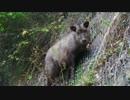 【ニコニコ動画】忍に跨り四国を巡る part2を解析してみた
