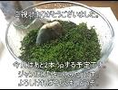 庭にある材料で簡単テラリウム作ってみた(*^。^*)