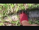 【ニコニコ動画】近くの野池でちょっと雷魚釣り その9を解析してみた