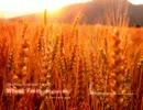 【ニコニコ動画】【オリジナル】Wheat Field【Uplifting Trance】を解析してみた