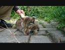 【ニコニコ動画】キジトラゴシゴシを解析してみた