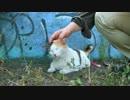 【ニコニコ動画】三毛猫もふもふを解析してみた