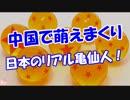 【中国で萌えまくり】 日本のリアル亀仙人!