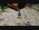 【ニコニコ動画】湧水水槽への道 Part6(経過報告編)を解析してみた