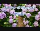 【ニコニコ動画】Flower of Miyazaki~紫陽花~を解析してみた