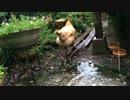 【ニコニコ動画】雨の日、ニワトリを解析してみた