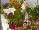 【ニコニコ動画】花の香り.wmvを解析してみた