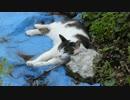 【ニコニコ動画】石を枕にするパンダ猫を解析してみた