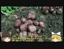 【ニコニコ動画】ゆっくり霊夢とゆっくり魔理沙の 家庭菜園 始めるよ 第6回を解析してみた