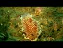 【ニコニコ動画】日本海でダイビングしてみたを解析してみた