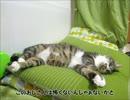 【ニコニコ動画】はじめての猫飼い90~オラオラ系女子~を解析してみた