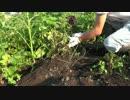 【ニコニコ動画】まったり農家な一日 第20話を解析してみた