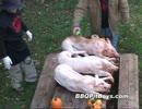 【ニコニコ動画】豚の丸焼きを解析してみた