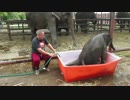 【ニコニコ動画】ゾウの赤ちゃん風呂遊びを解析してみた