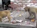 【ニコニコ動画】サルと犬のケンカを解析してみた