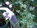 【ニコニコ動画】蜂にちょっかい出して逃げる猫を解析してみた