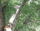 【ニコニコ動画】子猫助ける母親の猫を解析してみた