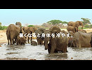 オービィ横浜 これが本当の動物だ ゾウ 篇