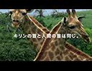 オービィ横浜 これが本当の動物だ キリン 篇