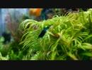 【ニコニコ動画】アクア提督と歩く水槽飼育記録 その27 水槽お引越し編6を解析してみた