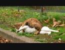 【ニコニコ動画】新たな猫スポットを解析してみた