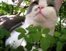 ツツジの蔭で涼む猫